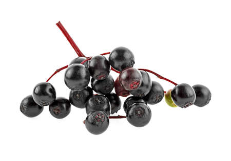 Small branch of black elderberry fruit on a white background
