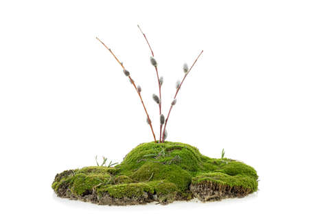 Green mossy hill with branches isolated on a white background Reklamní fotografie