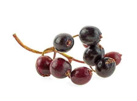 Black elderberry fresh fruit isolated on white background 写真素材