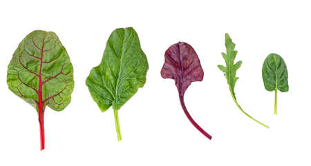 Healthy and diet food - salad mix with rucola, spinach, leaves of red chard and leaves of bulls blood on white background. Top view. Imagens