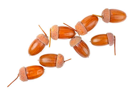 Brown acorns on a white background, top view.