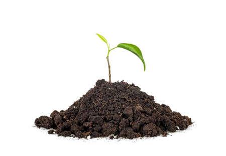 Green plant planted on soil, white background. Zdjęcie Seryjne