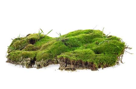 Grünes Moos mit Gras auf weißem Hintergrund Standard-Bild
