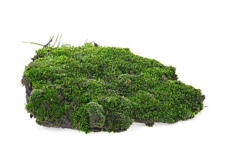 Wet green moss isolated on a white background Imagens