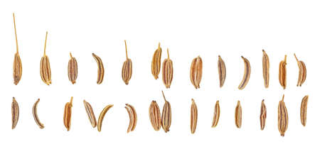 Set of different cumin seeds isolated on white background, top view. Caraway seeds. Banco de Imagens
