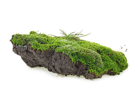 Green moss isolated on a white background. Green mossy hill. Stock Photo