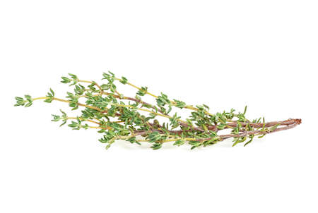 Sprig of fragrant thyme isolated on white background
