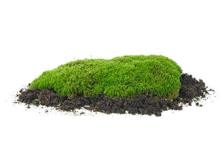 Green moss on soil pile, isolated on white background, full focus.