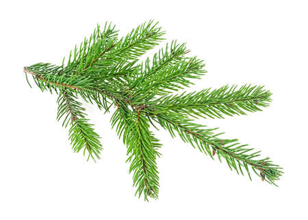 Branch of fir tree on a white background. Christmas tree branch.