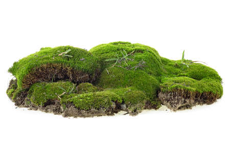 Green moss isolated on a white background. Mossy hill.