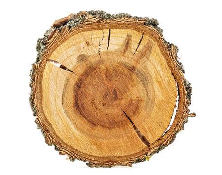 Abricotier - Coupe transversale du tronc d'arbre isolé sur fond blanc.
