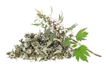Pile of dried motherwort herb and fresh branch on a white background. Yi mu cao. Banque d'images