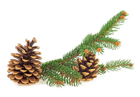 Branch of fir tree and two fir cones, isolated on a white background.