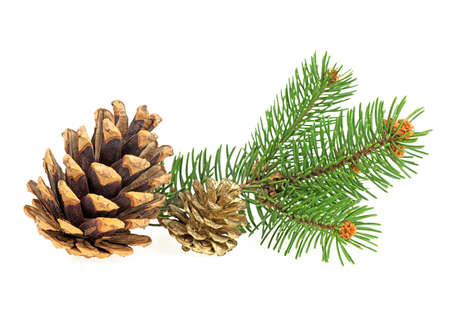 Pine branch with pine cones isolated on white background. Christmas background.