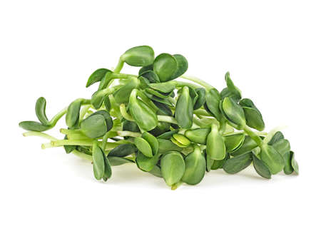 Young sprout microgreen isolated on white background. Sunflower sprouts.