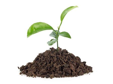 Piccola pianta verde in crescita con terreno marrone scuro, sfondo bianco.
