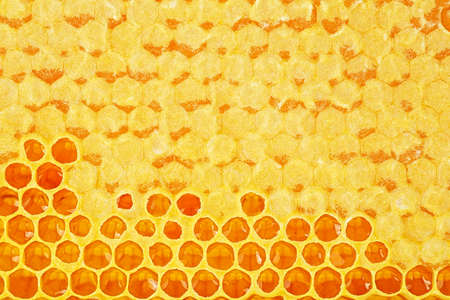 Apiculture - Bee honeycombs with honey as background