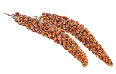 Red millet twigs isolated on a white background. Red millet seeds.