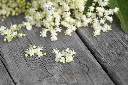 Elderberry flowers on a wooden background. Blossoms, elder flowers. Macro. Selective focus.