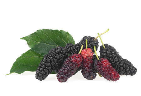 Fresh organic Mulberry fruits with green leaves isolated on a white background. Stock fotó