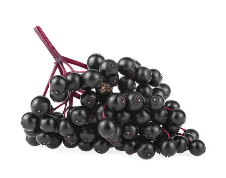 Black berries of elder on branch isolated on a white background. Sambucus.