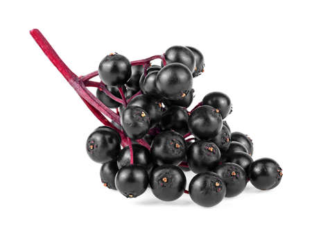 Elderberry fresh fruit isolated on a white background. Elderberries with twig. Sambucus branch. European black elderberry.