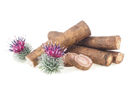 Burdock roots and burdock flowers isolated on a white background. Prickly heads of burdock flowers. Treatment plant.