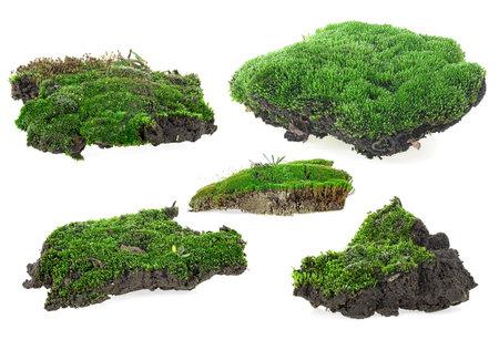 Green moss isolated on a white background. Green moss set. Reklamní fotografie