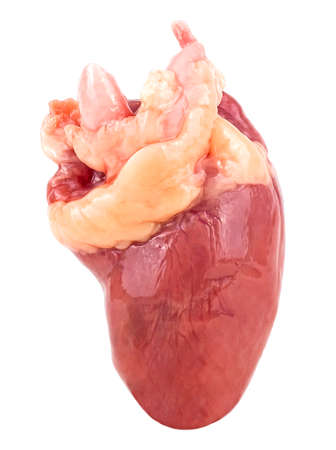 Raw chicken heart isolated on a white background