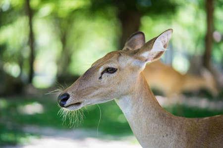 close up of antelope head