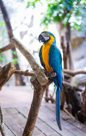 Blue-yellow macaw parrot in the zoo