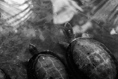 The turtles in the water 스톡 콘텐츠