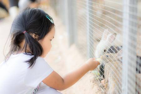 Cute little girl feeding rabbit on the farm Foto de archivo