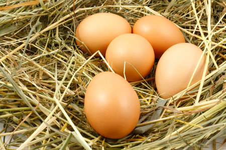 nest egg: Eggs in the nest