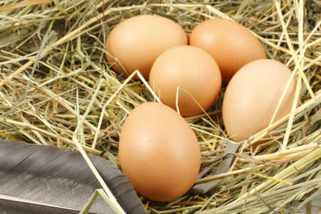 Eggs in the nest photo