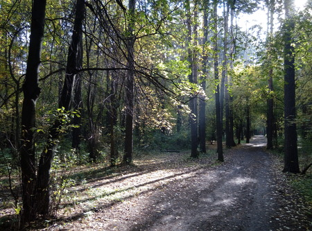 forest trail: forest, trail, autumn
