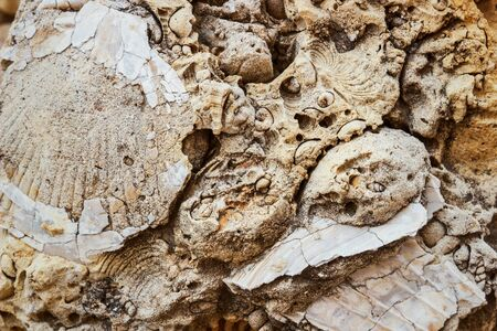solid background: fossilized remains of seashells