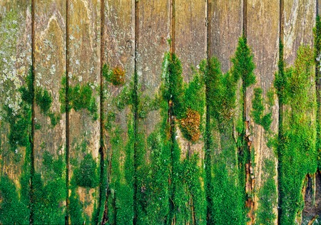 the image old wooden fence with green moss