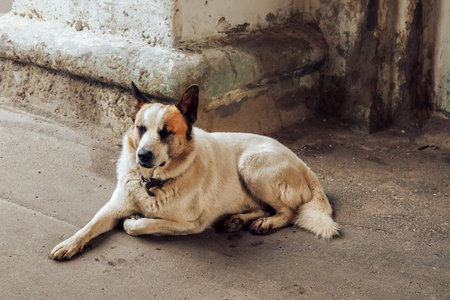 the image lonely dog lying on the pavement