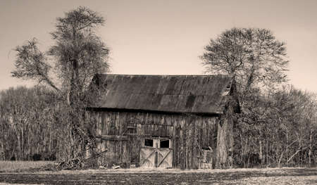 The Leaning Shed