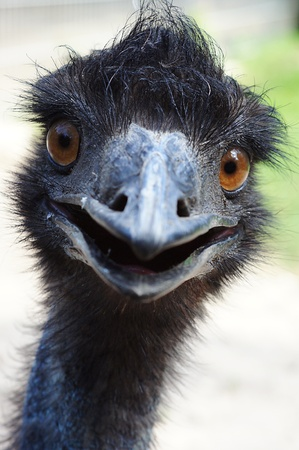 nostril: Curious Emu