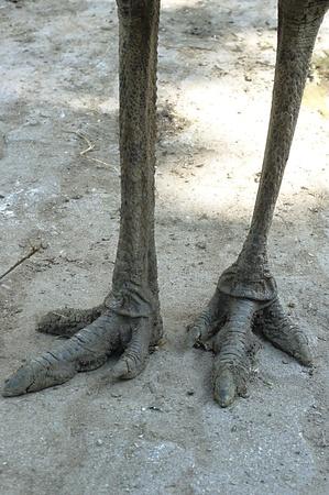 emu: Piernas desnudas
