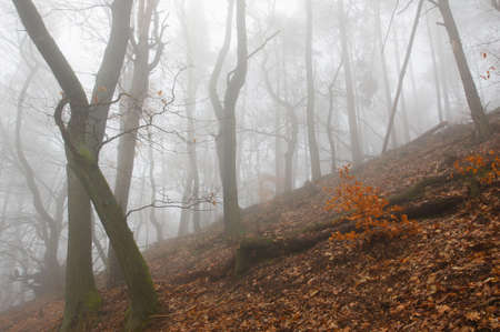overthrown: Fog in the wood