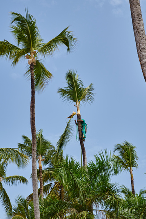 fronds: Workers at removing palm fronds