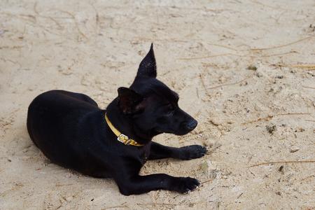 vigilant: Young dog Stock Photo