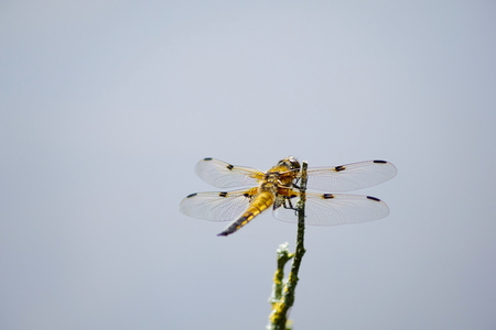 biotope: Dragonfly