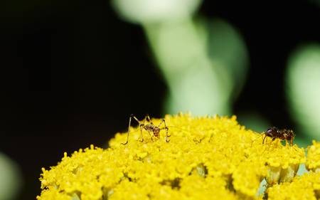 Insects on a yarrow flower Stock Photo