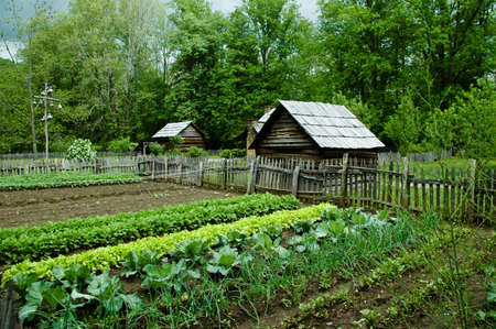 home garden: Vegetable Garden with gourd bird houses.