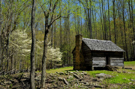 homestead: Log Cabin with blooming dogwood trees