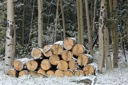 Firewood gathering snow photo